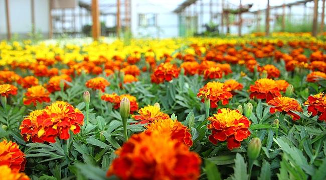 Çankaya Parklarına 600 Bin Çiçek