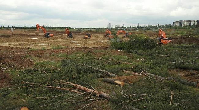 Ankara'da ODTÜ'de Ağaç Katliamı
