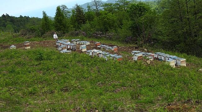 Ankara Ekonomisine Katkı Sağlayacak Bal Ormanı Kuruldu