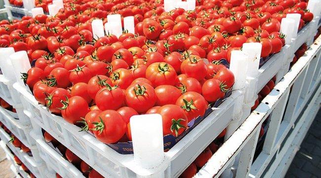 51 ülkeye 313 milyon dolarlık Türk domatesi