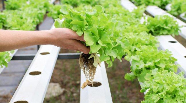 2050'ye kadar yüzde 60 daha fazla gıda üretimi gerekecek