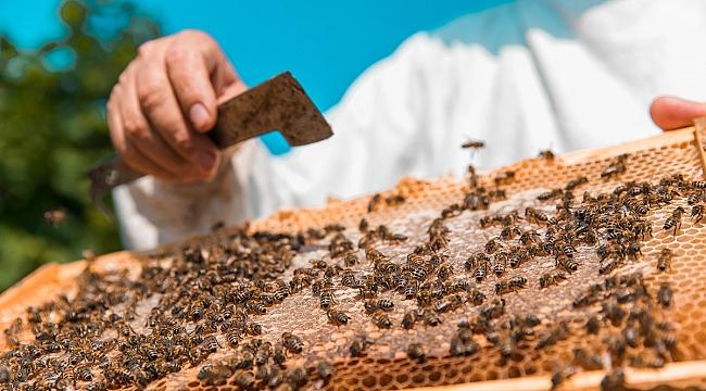 Arılar 2021'in havası nedeniyle erkenden uyandılar