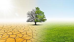 Türkiye'de 3.5 milyon hektar tarım toprağı yok oldu
